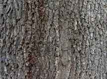 Casca de árvore 5 imagem de stock
