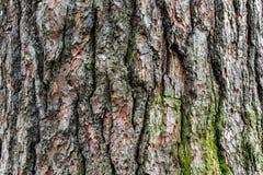 Casca de árvore 7 foto de stock