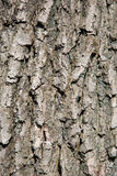 Casca de árvore Imagem de Stock