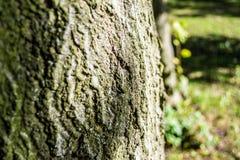 Casca de árvore Fotografia de Stock Royalty Free