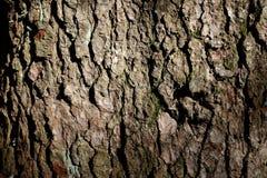 Casca de árvore abstrata Imagens de Stock