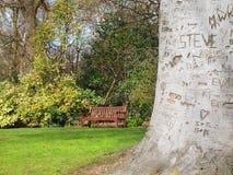 Casca de árvore cinzelada Fotos de Stock Royalty Free