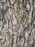 A casca de árvore cinzenta bonita é arte do abstrack Imagem de Stock