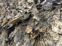 A casca de árvore cinzenta bonita é arte do abstrack Foto de Stock