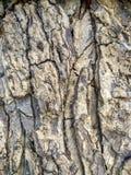 A casca de árvore cinzenta e preta bonita é arte abstrato e textura Foto de Stock Royalty Free
