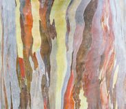 Casca de árvore colorida na natureza Fotografia de Stock Royalty Free