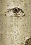 Casca de árvore com projeto do olho Fotografia de Stock