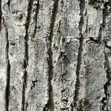 Casca de árvore como o fundo Foto de Stock Royalty Free