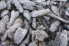 Casca de árvore congelada imagem de stock royalty free