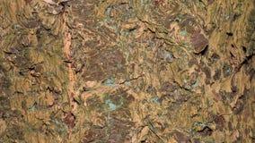 Casca de árvore da textura Fotografia de Stock Royalty Free