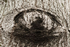 Casca de árvore dada forma como o olho Foto de Stock Royalty Free
