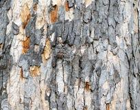 Casca de árvore descascada 2 imagem de stock