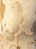 Casca de árvore Detalhe de uma casca de árvore Foto de Stock