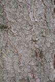 Casca de árvore do abeto Fotografia de Stock Royalty Free