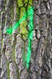 Casca de árvore do número um Fotos de Stock Royalty Free