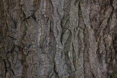 Casca de árvore do relevo Imagens de Stock