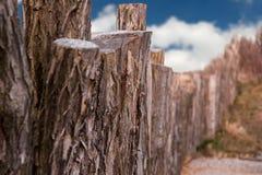 Casca de árvore do tronco Imagens de Stock Royalty Free