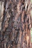 Casca de árvore 4 - eucalipto do comensal, Kalorama Imagens de Stock
