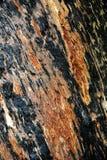 Casca de árvore gigante do Tingle da Austrália Ocidental Foto de Stock Royalty Free