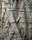 Casca de árvore - Montezuma Cypress Imagem de Stock Royalty Free