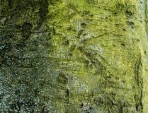 Casca de árvore musgoso 1 Foto de Stock Royalty Free
