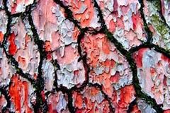 Casca de árvore nas cores imagens de stock