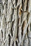 Casca de árvore pesadamente Textured fotos de stock royalty free