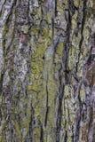 Casca de árvore resistida velha Imagens de Stock