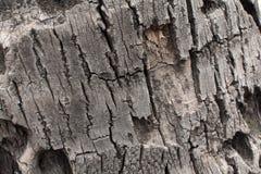 Casca de árvore secada Fotografia de Stock Royalty Free