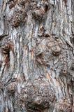 Casca de árvore sulcado Imagem de Stock Royalty Free