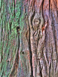 Casca de árvore velha fotos de stock