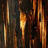 Casca de árvore velha, textura iluminada Fotos de Stock