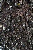 Casca de árvores Fotografia de Stock