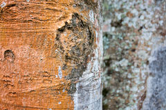 A casca de árvores tropicais imagens de stock royalty free