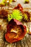 Casca de fruta em uma tabela de madeira foto de stock
