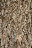 Casca de madeira Fotos de Stock