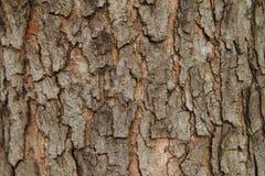 Casca de madeira Fotos de Stock Royalty Free