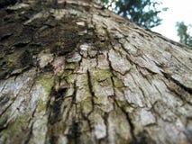 Casca de madeira Fotografia de Stock