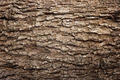 Casca de madeira abstrata da textura Foto de Stock Royalty Free
