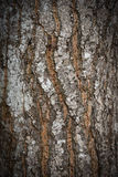 Casca de madeira abstrata da textura Fotos de Stock