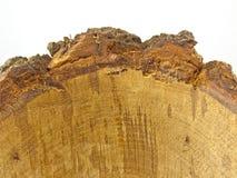 Casca de madeira do carvalho Imagens de Stock