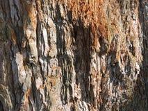 Casca de madeira Textura imagens de stock royalty free