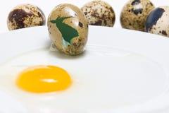 Casca de ovo do close up Fotos de Stock Royalty Free