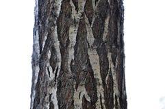 A casca de ?rvore com texturas bonitas isolou o fundo branco imagem de stock