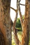 Casca de ?rvore Textured em Highland Park Rochester New York imagens de stock royalty free