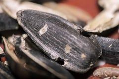 Casca de sementes de girassol no macro na tabela Fotografia de Stock
