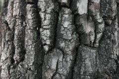 A casca de um close up da árvore Foto de Stock