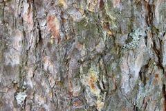 Casca de um close-up da árvore O fundo Fotos de Stock