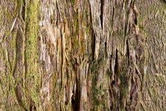 Casca de um fundo do teste padrão da textura da árvore fotografia de stock