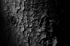 Casca de uma árvore fotografia de stock
